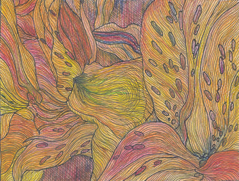 Orange orchid, marker and colored pencils on paper