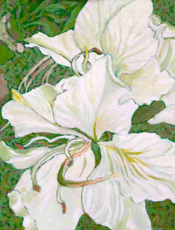 White Bauhinia