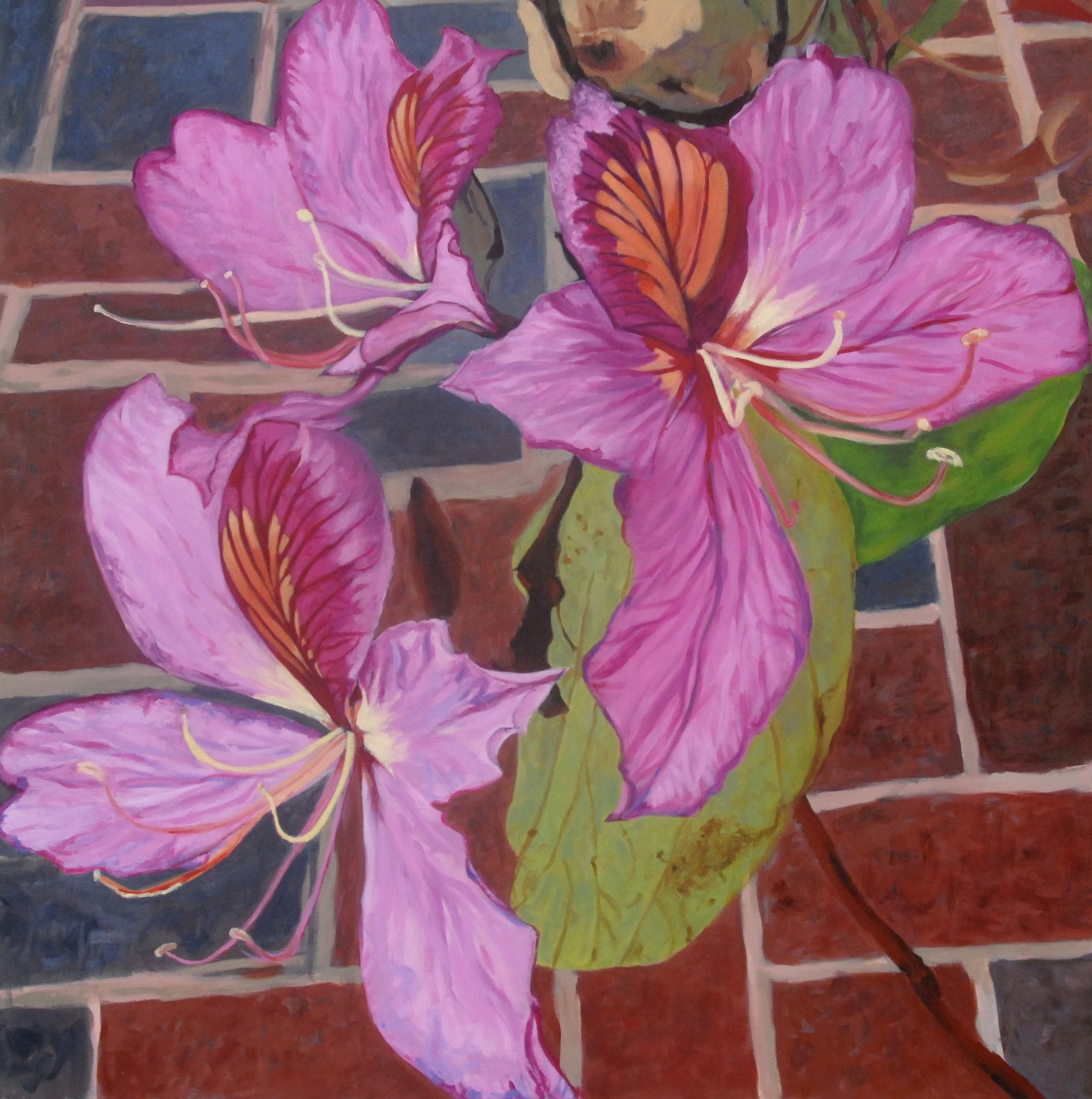 Pink Bauhinia