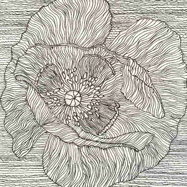 White and Black Poppy