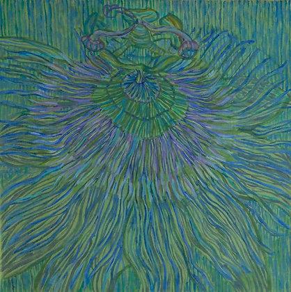 Blue Passiflora