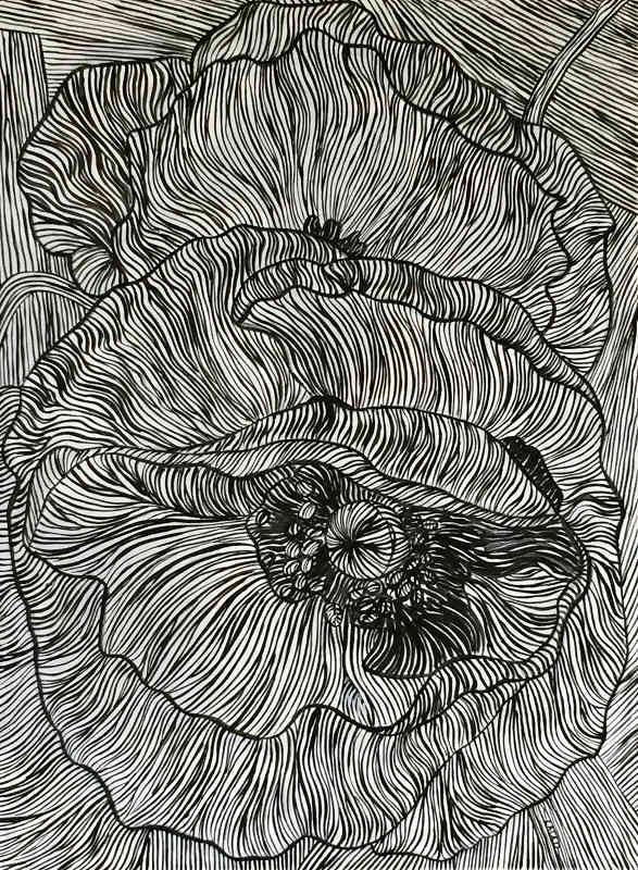 Black and White poppies _0.jpg