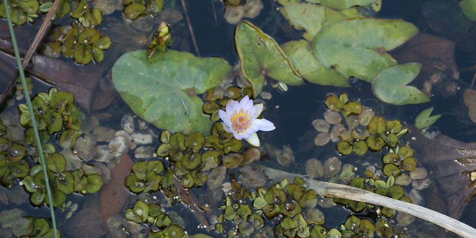 Walks at Wethersfield: Vernal Pools