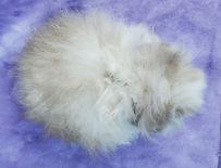 Molli's broken blue tort fuzzy doe top.jpg