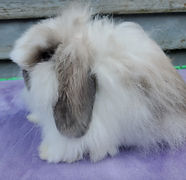 Molli's broken blue tort fuzzy doe profile.jpg
