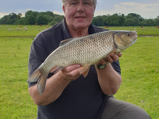 River Dove Chub