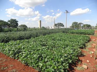 Projeto de pós-doutorado aprovado pelo CNPq visa aumentar a resiliência do sistema produtivo da soja
