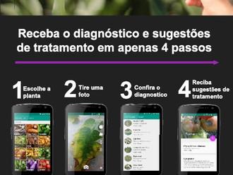 Combater pragas e doenças de plantas com Image Recognition - Plantix: um exemplo muito útil e colabo