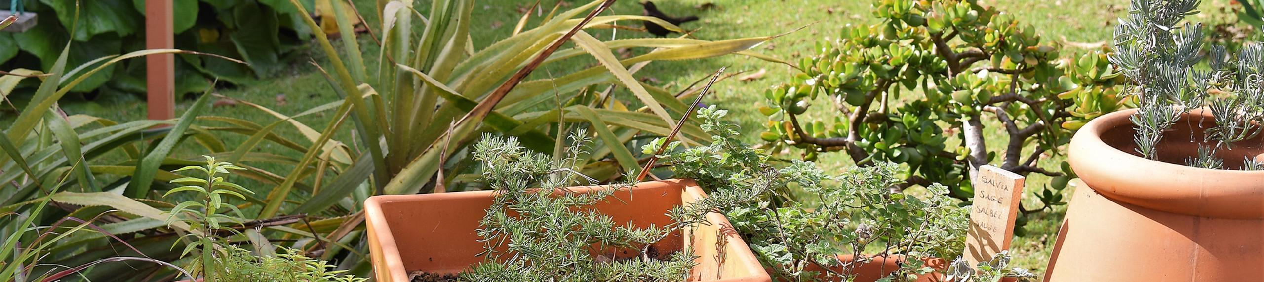 Quinta da Meia Eira - Ervas Aromáticas