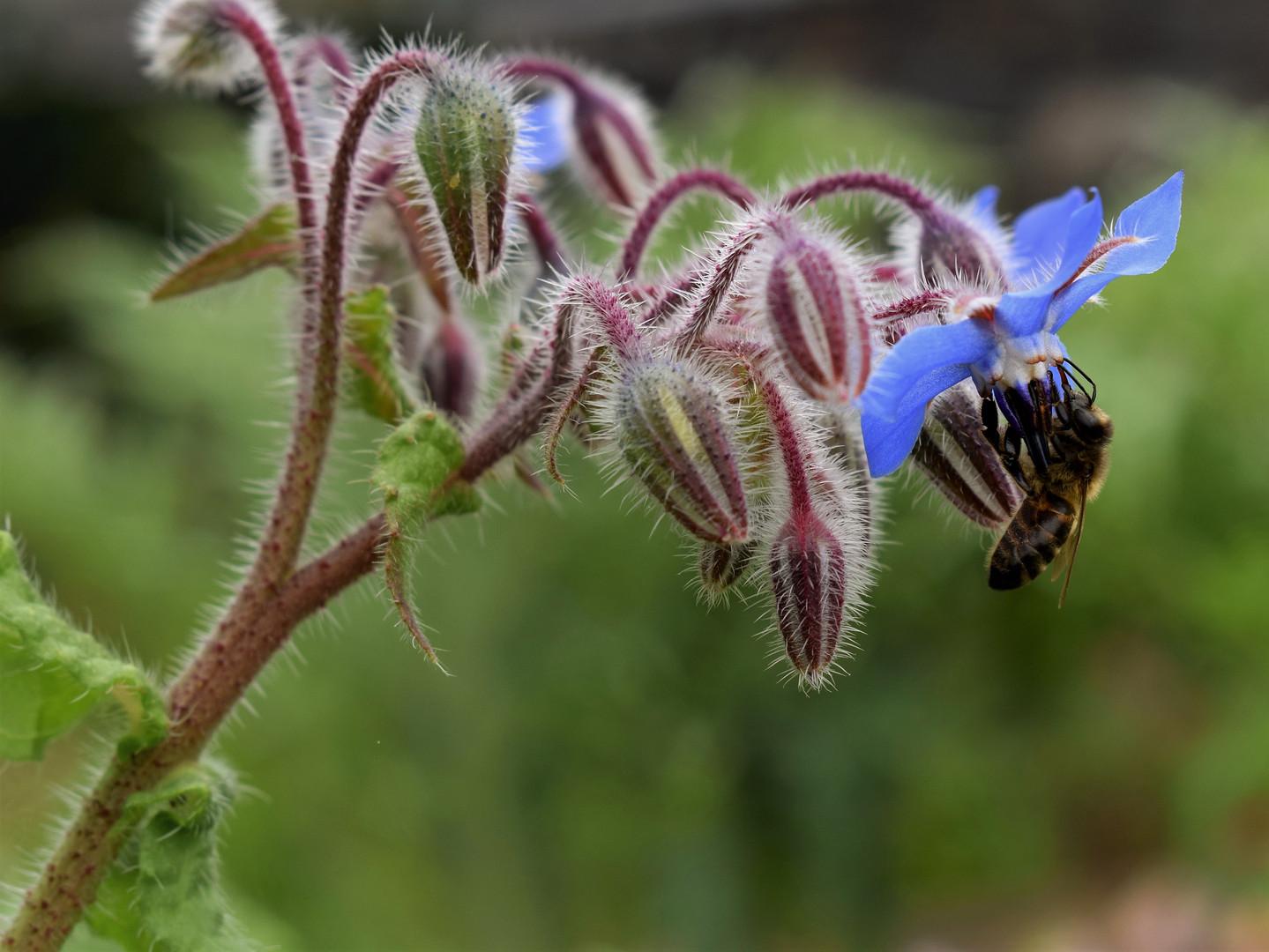 como vivem as abelhas