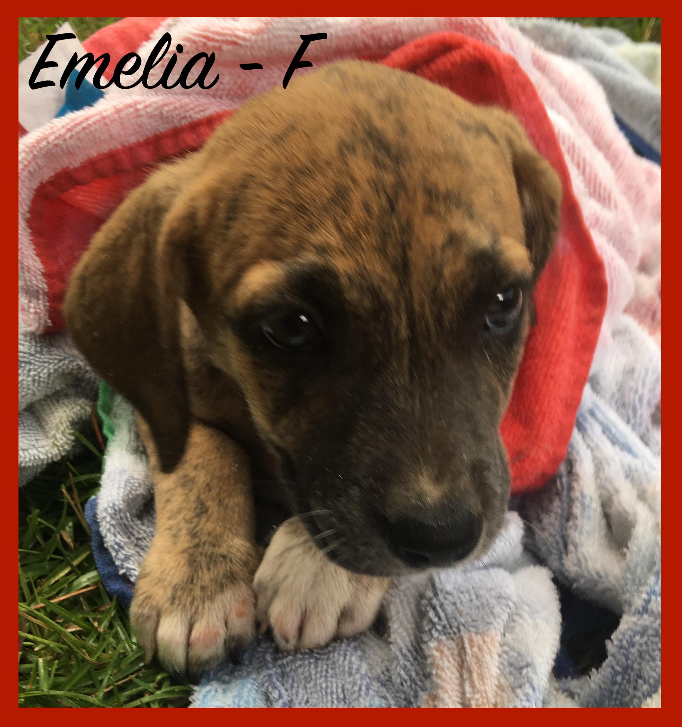 Emelia - F