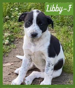Libby - F - Pending