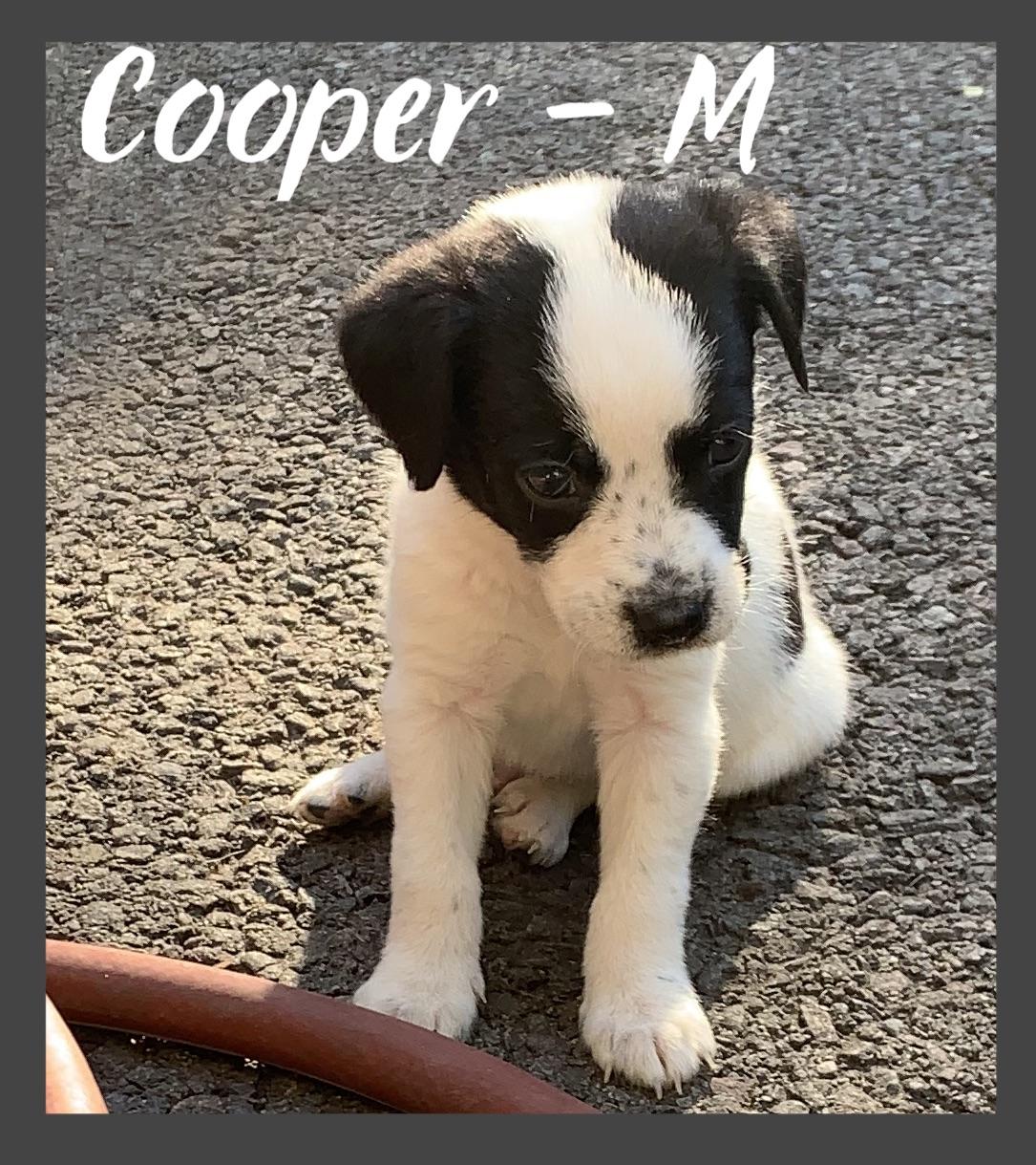 PENDING - Cooper - M