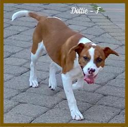 Dottie - F