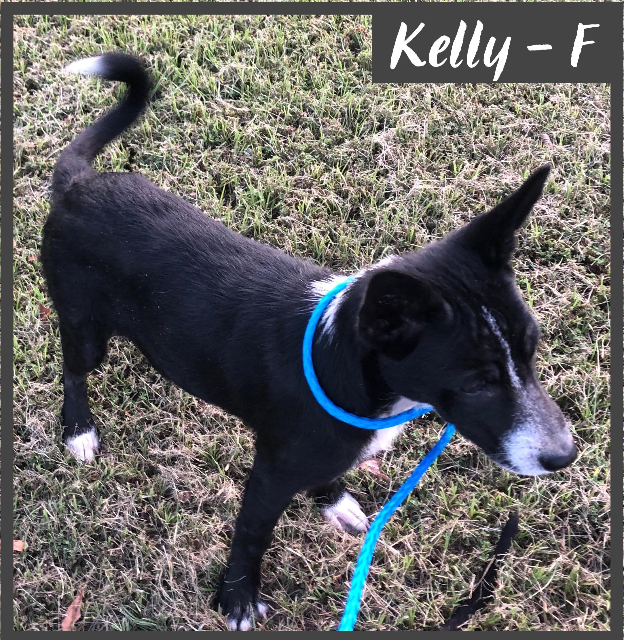 Kelly - F