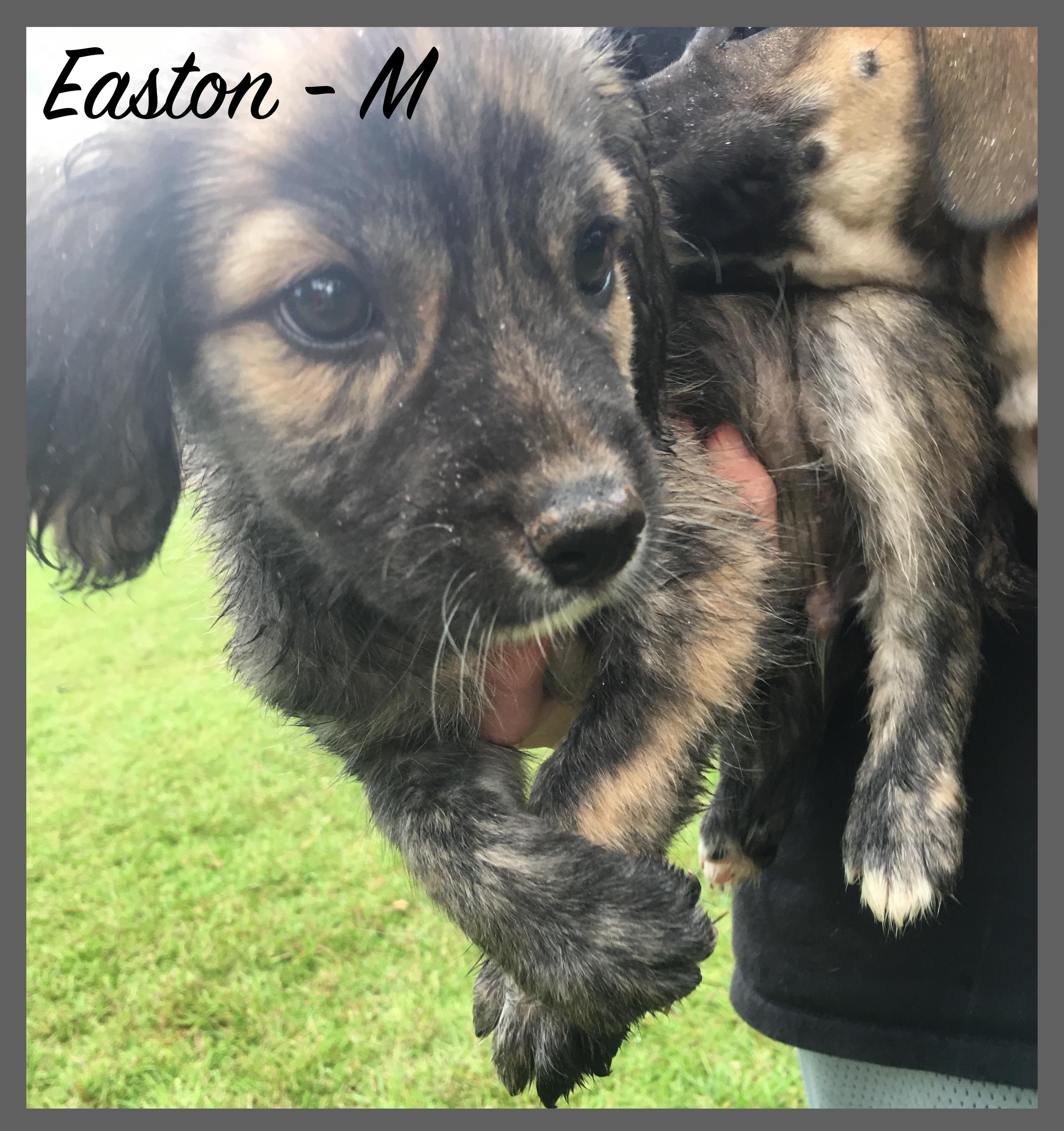 Easton -M