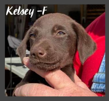 PENDING - Kelsey - F