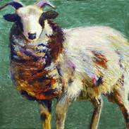 Letvin+Single+Sheep+%2325%2818_%29+Large