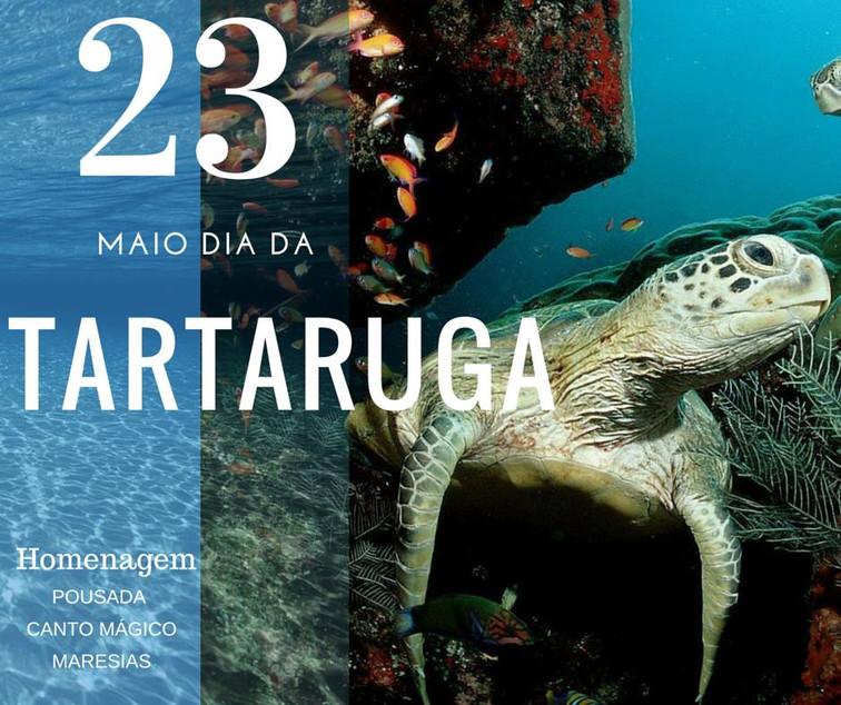 Homenagem as Tartarugas Desse Planeta! Elas apareceram milhões de anos antes dos primeiros seres hum