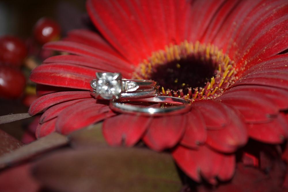 Wedding rings on a vibrant gerber daisy