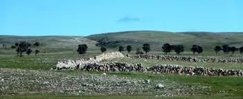 Rock Farming