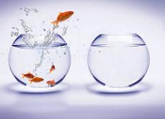 Hoe innovatieve organisaties voorop blijven
