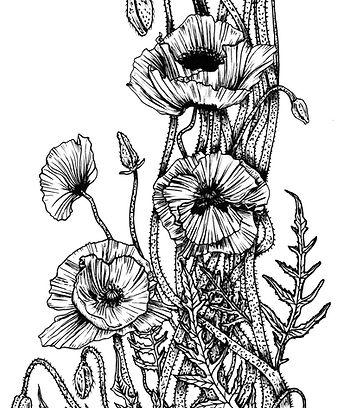 detail of original poppy illustration