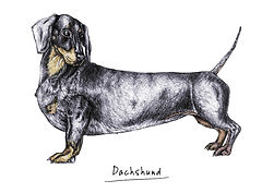 Sausage dog illustration