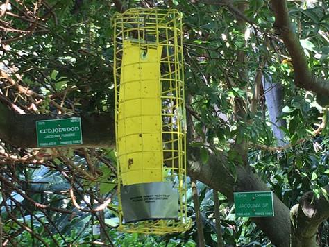 Foster Botanical Garden Survey