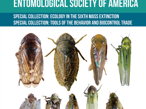 EIGHT LEAFHOPPERS (HEMIPTERA: CICADELLIDAE) NEWLY RECORDED FROM HAWAI'I