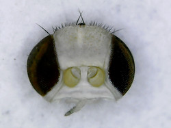 Figure 31a