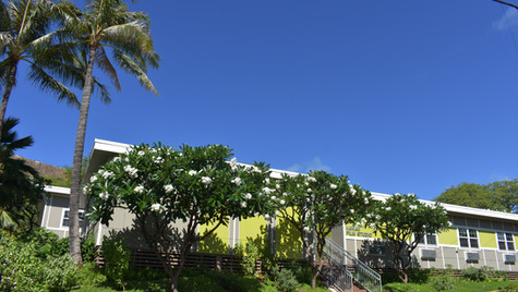 2 HFS Bungalow A shade Plumeria Trees and natives from the new driveway.JPG