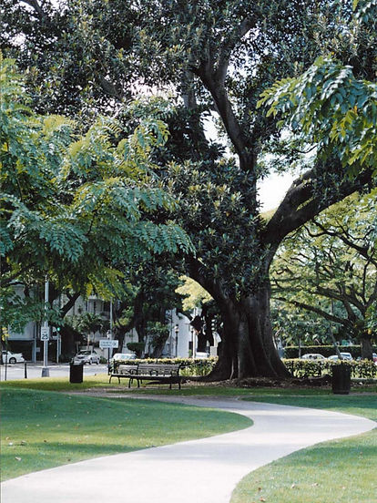 0 0 walk tree 06.jpg