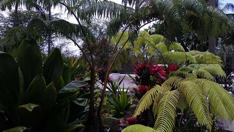 8 LDS NATIVE PLANTS.jpg