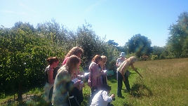 Herb Walk in an Ancient Natural Wild Flower Meadow with Amanda Howe