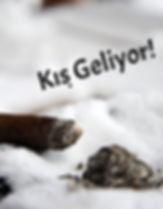 Kıs_Puro_edited.jpg
