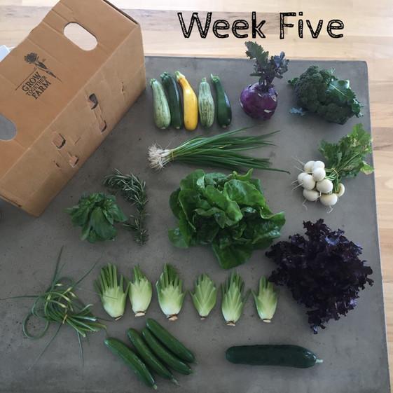 Vege Box 5