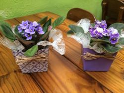 Vasos de Violetas