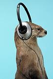 DJ Otter.png