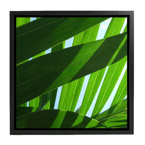 Cayman Leaf Shadows 20x20.jpg