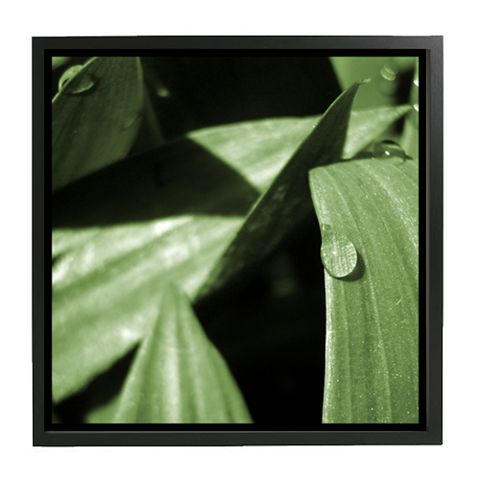 Cayman Leaf raindrop 20x20.jpg