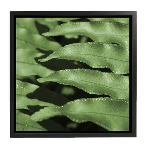 Cayman Leaf stitches 20x20 (2).jpg