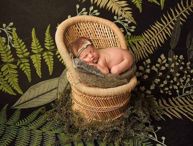 boho greenery plant baby wicker