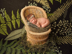 boho greenery plant baby wicker