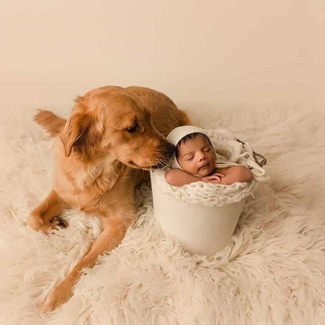 baby and dog picture photo portrait