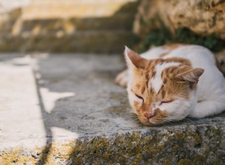 Summer Heat & Cats