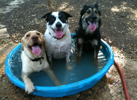Summer Heat & Dogs