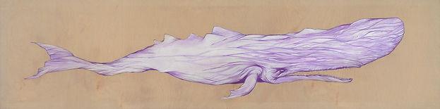 Whale - White Whale -sperm whale