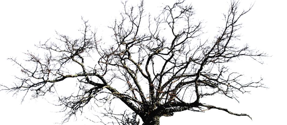 """""""Los árboles mueren de pie"""" – Obra teatral"""