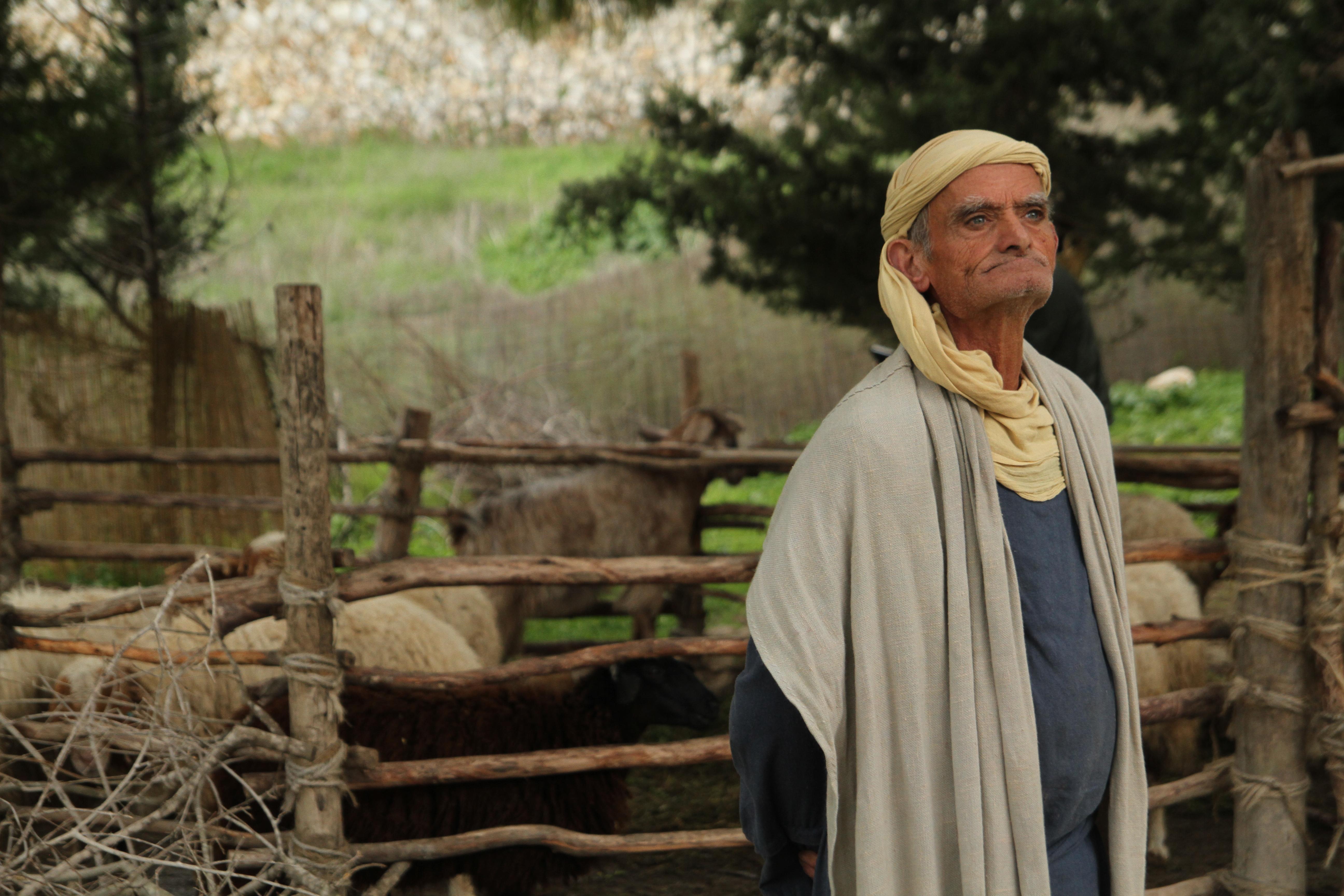Goat Herder in Israel